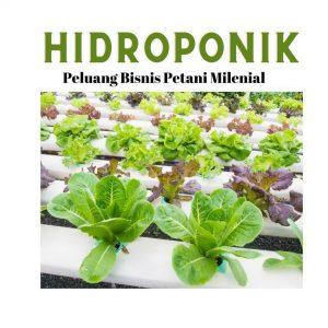 petani hidroponik